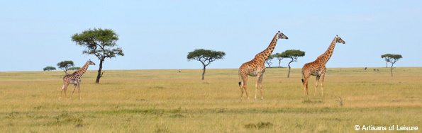 Exclusive safari tours in Kenya & Tanzania
