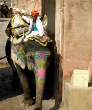 Riding elephants in Jaipur, India