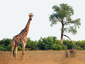 luxury tour Botswana