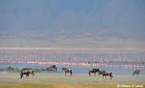 Tanzania Ngorongoro wildebeest and flamingo
