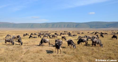 Tanzania Ngorongoro wildebeest
