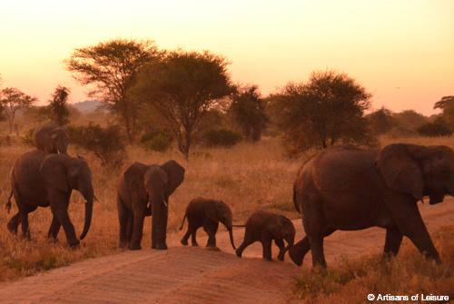 Tanzania Tarangire elephants
