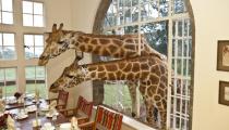 Highlights of Kenya and Tanzania