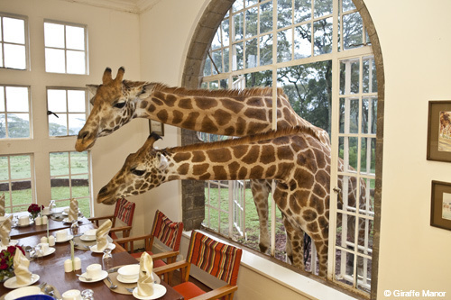 Giraffe Manor luxury Kenya safaris