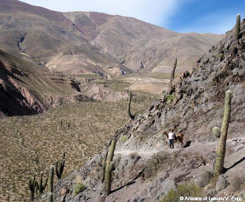 llama trekking in Argentina