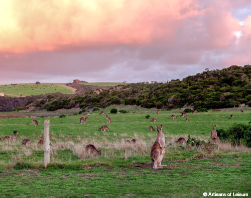 wildlife tours Australia
