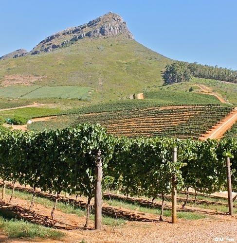 private Winelands tours