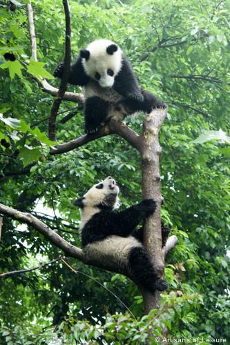 Pandas tours Chengdu
