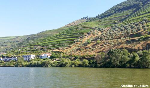 Douro terraced hillsides