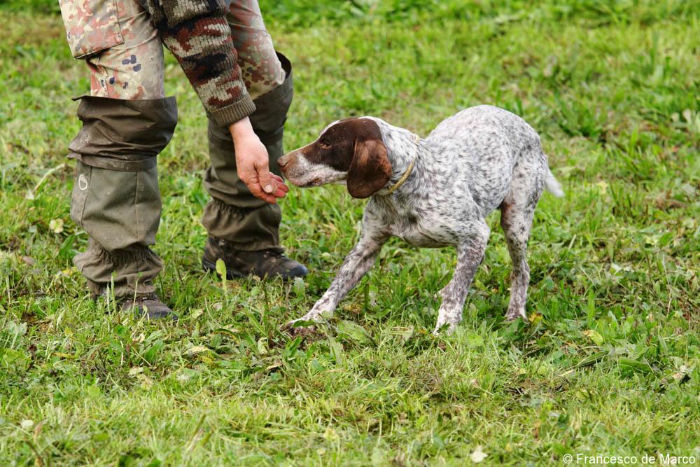 Italy truffle hunting