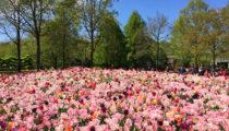 Gardens of the Netherlands