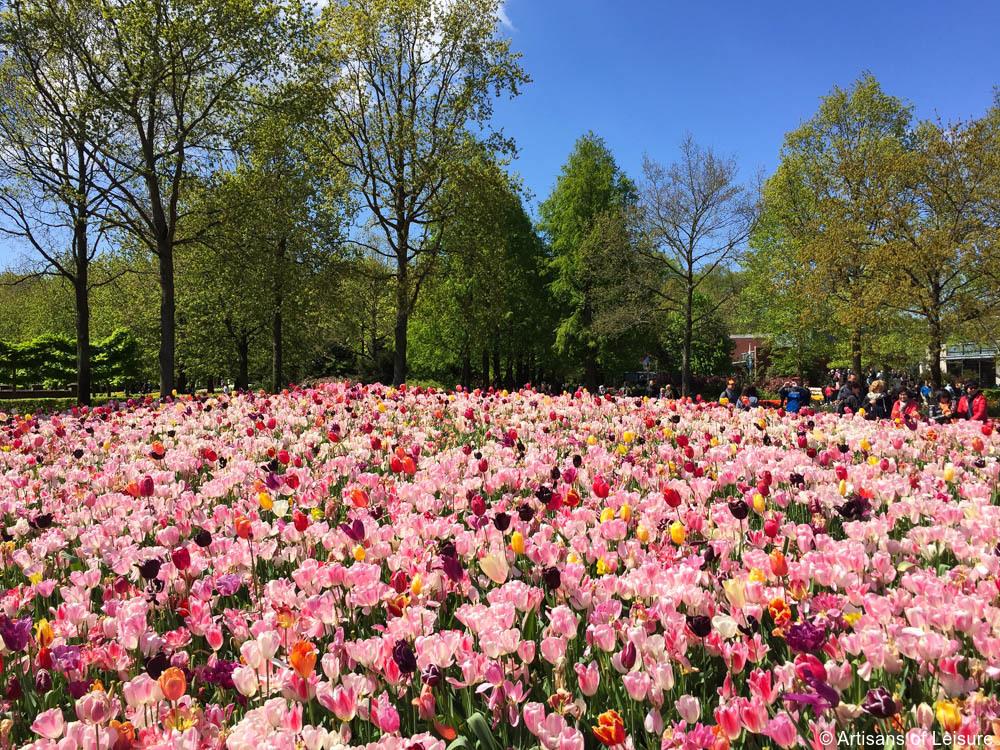 Keukenhof tours Amsterdam