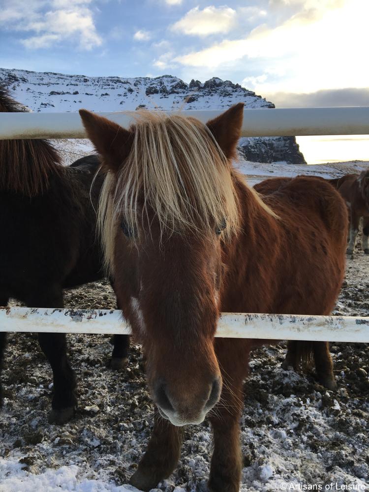 family travel Iceland