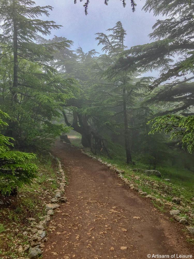 Cedar Reserve Lebanon tours