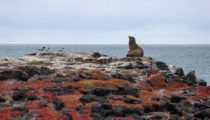 Highlights of Ecuador & the Galapagos
