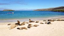 Highlights of Ecuador & the Galapagos