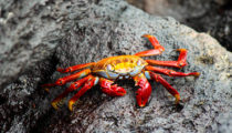 Luxury Adventure Tour of Ecuador & the Galapagos