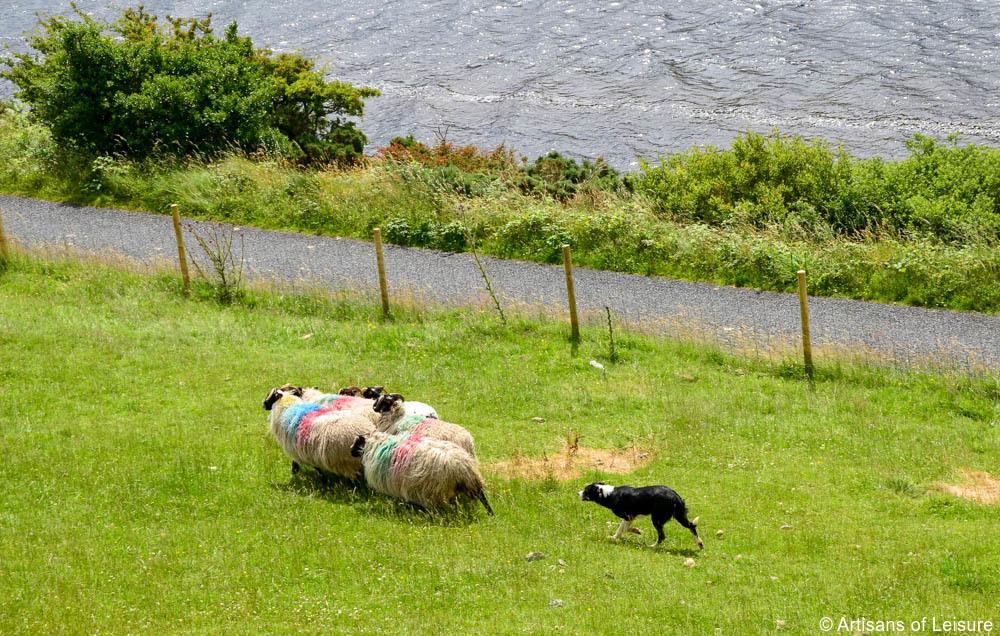 Family tour Ireland