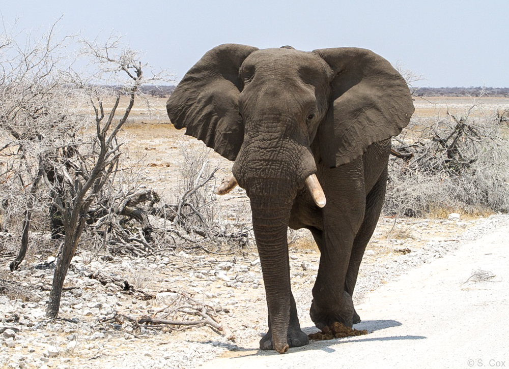 luxury Namibia safaris tours