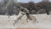 Highlights of South Africa & Namibia