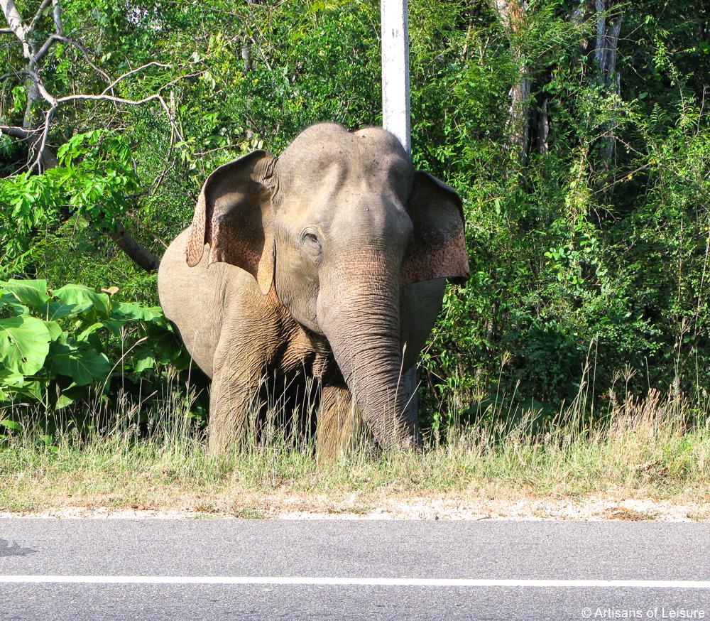 luxury tours Sri Lanka