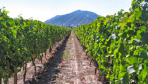 The Ultimate Wine Tour: Argentina & Chile
