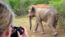 Journey Through Sri Lanka