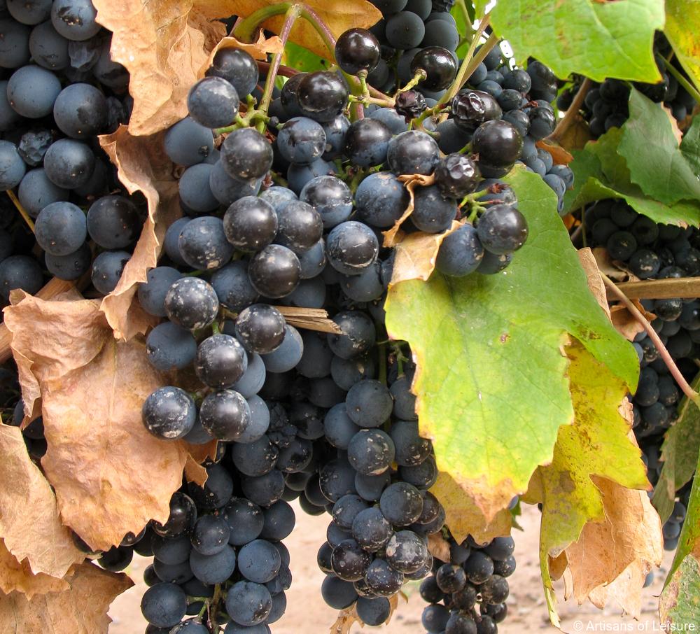 private Argentina wine tours