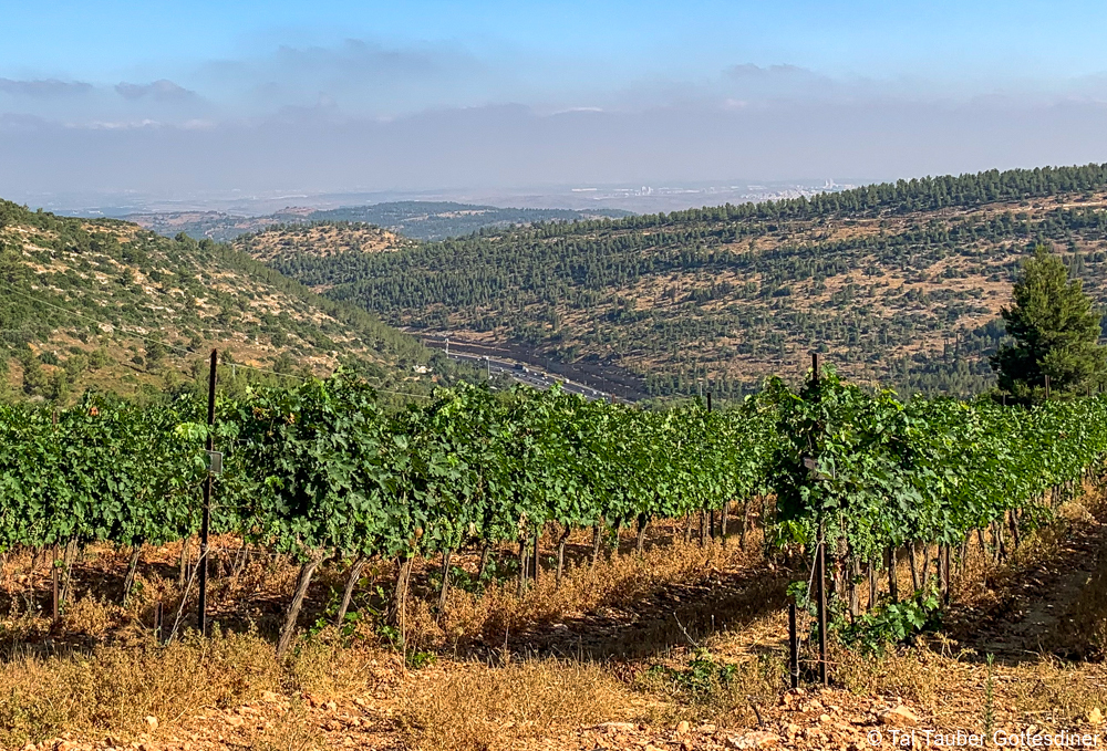 private Israel food and wine tours