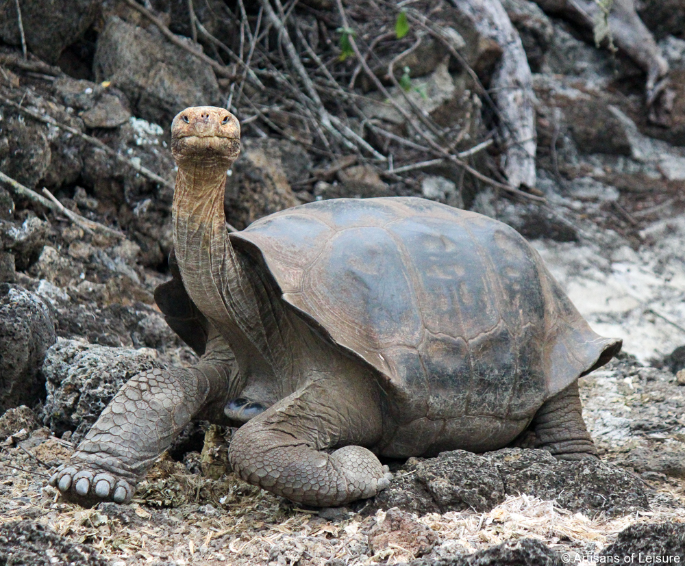 private Galapagos tours
