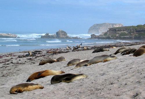 140-Seal-Bay.jpg