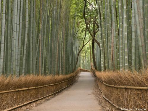 351-bamboo-in-Kyoto.jpg