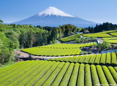 354-Mt.-Fuji-with-tea.jpg