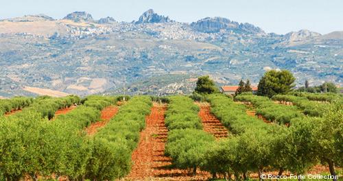 363-Rocco-Forte_Sicily.jpg