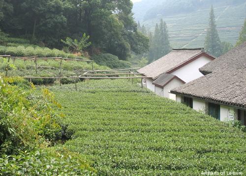 459-Hangzhou_teaplantation.jpg