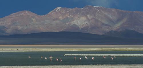 472-Atacama_Awasi_8_500px.jpg