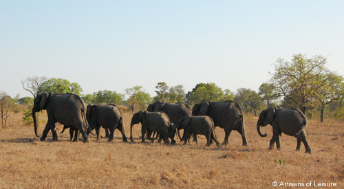 503-elephants_Singita_South-Afr.jpg