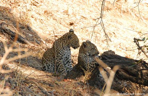 504-wildlife_Africa-safari.jpg