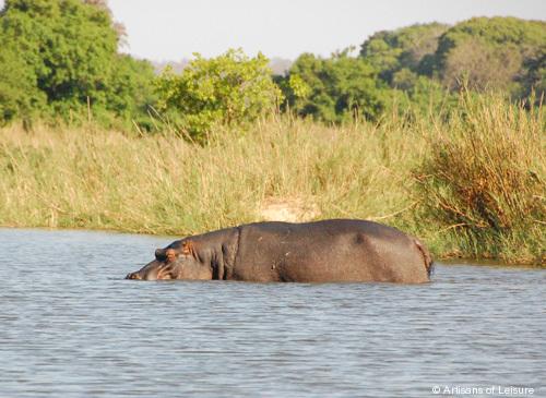 505-Hippo_South-Africa.jpg