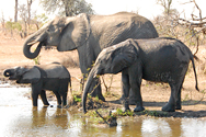 647-South Africa_elephants.jpg