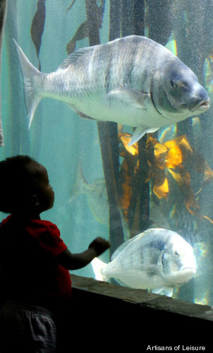 751-Cape_Town_aquarium.jpg