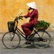 795-Vietnam.jpg