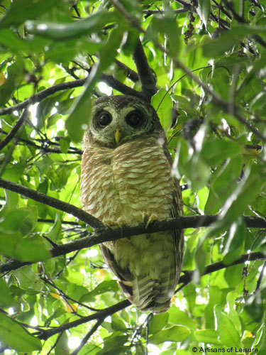 812-owl.jpg