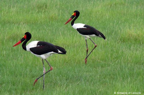 816-Storks.jpg