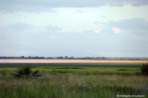 818-Lake_Manyara_Flamingoes.jpg