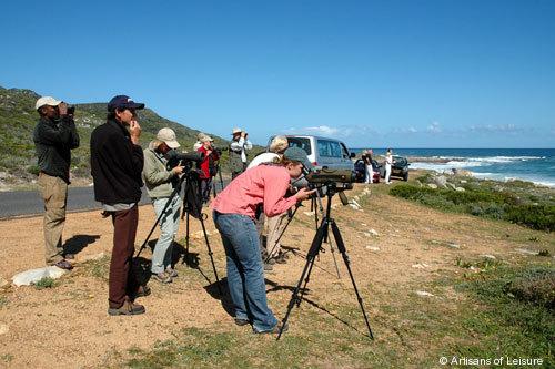 819-Cape_Town_birdwatching.jpg