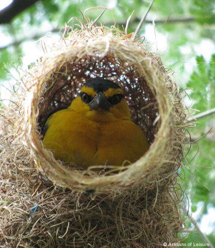 821-nest.jpg